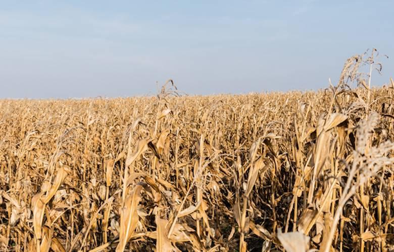 Red Tsiri: los verdaderos hijos del maíz